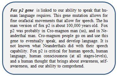 fox p2 gene